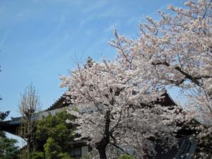 Sibasakura02