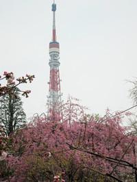 Sibasakura06