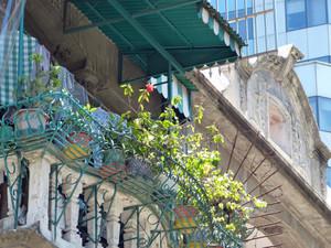 Macau511