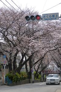 Sakurazaka01