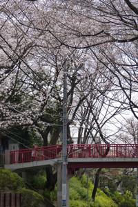 Sakurazaka02