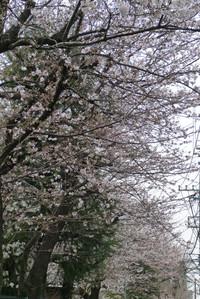 Yukigaya1