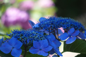 Blue06