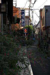 Yanaka305