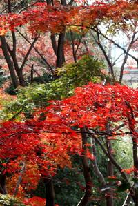 Tamagawapark06