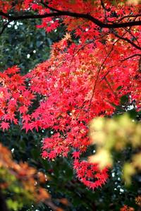 Tamagawapark09